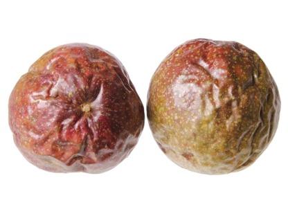 Çarkıfelek (Passion Fruit)
